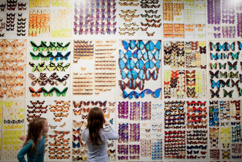 Two girls look at a wall of butterflies in museum